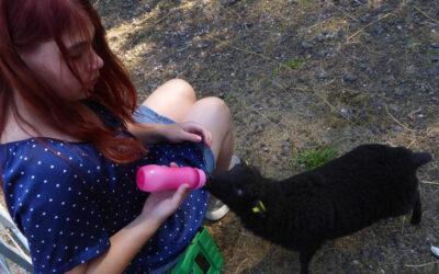 Dyrene er Saras fristed